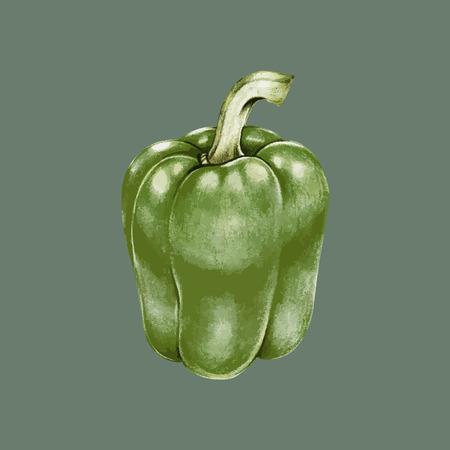 Illustration of bell pepper Stock Photo