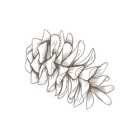 Pine cone illustration on white background