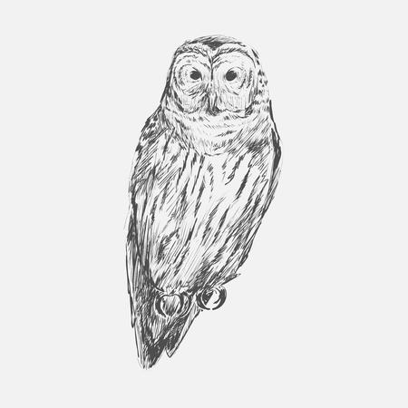 Illustration drawing style of owl Banco de Imagens