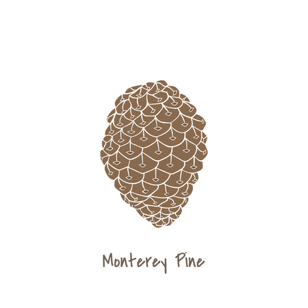 Monterey pine concept