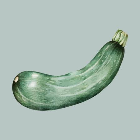 Illustration of a zucchini Imagens