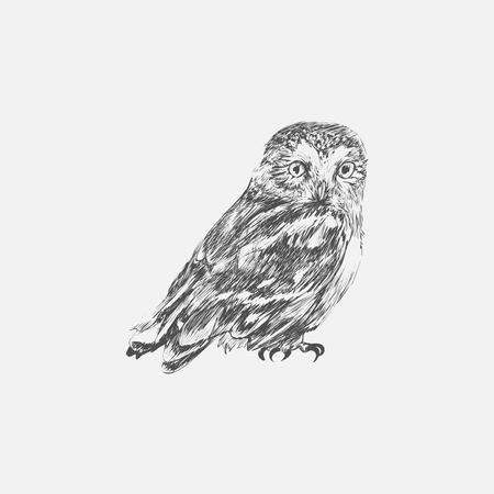 Illustration Zeichnung Stil Eule Standard-Bild - 95979761