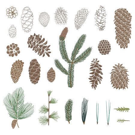 Illustration of pinecone collection