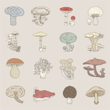 Illustration of different kinds of mushrooms 스톡 콘텐츠 - 95980202