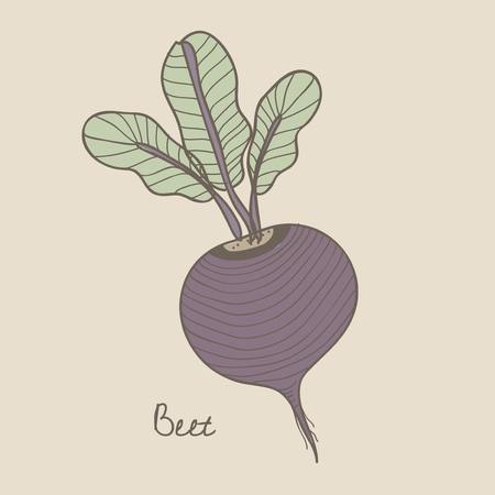 Illustration of a beet 스톡 콘텐츠