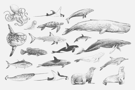 Illustration drawing style of marine life collection 스톡 콘텐츠