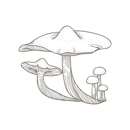 버섯의 일러스트 레이션 스톡 콘텐츠 - 95979147