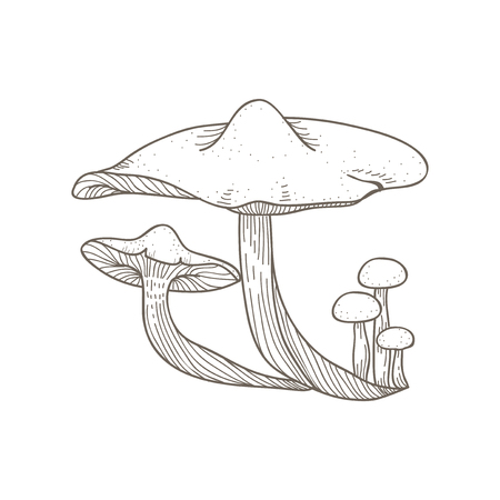 Illustration of mushroom Stok Fotoğraf - 95979147
