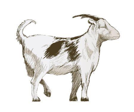 Illustration drawing style of goat Stock Photo