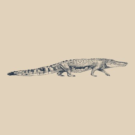 Illustration drawing style of alligator Imagens - 95975180