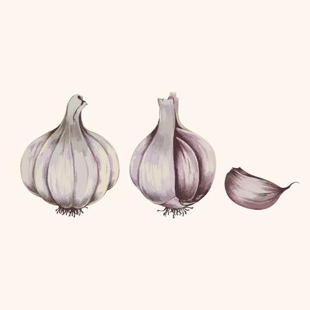 Illustration of garlic cloves
