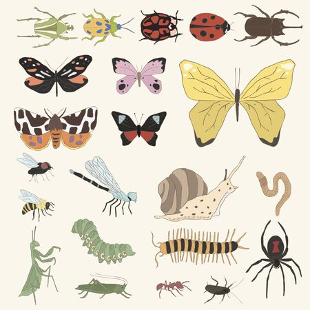 Illustration of different kinds of insects