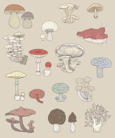 Illustration of different kinds of mushrooms Stok Fotoğraf - 95978450