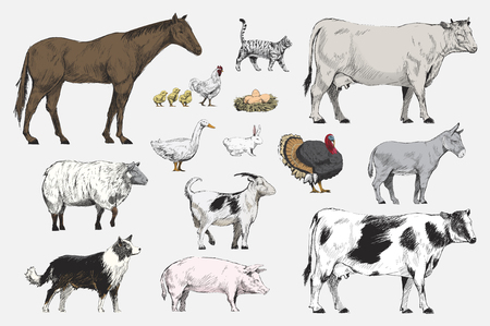 Illustration drawing style of animal collection Standard-Bild
