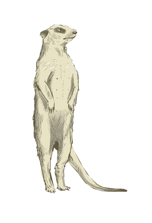 Illustration drawing style of animal collection Stock Illustration - 96936506