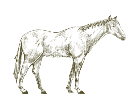 Illustration drawing style of horse Banque d'images - 96937964