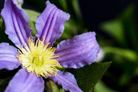 Close up of flower in the garden Zdjęcie Seryjne