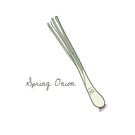 Illustration of a spring onion Stock Photo