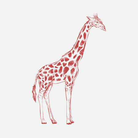 Illustration drawing style of giraffe