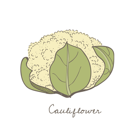 Illustration of a cauliflower