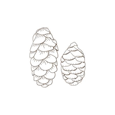 Conifer cones concept Banco de Imagens - 115989258