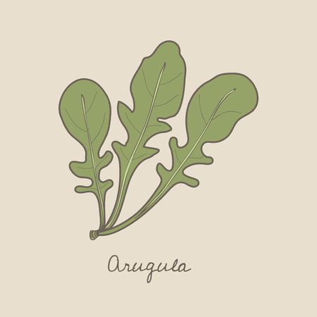 Illustration of an arugula Stock Illustration - 96798301