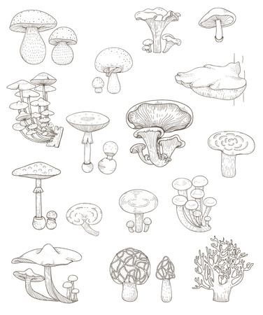 Illustration of different kinds of mushrooms 스톡 콘텐츠 - 96798149