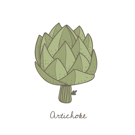 Illustration of an artichoke Stock Photo