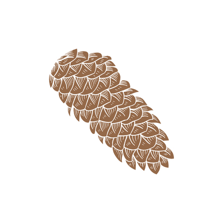 Conifer cone concept Stock fotó