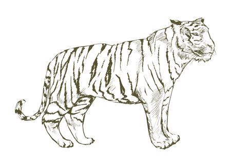 Style de dessin de tigre Banque d'images - 96572558
