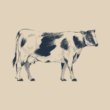 Illustration drawing style of cow Stock Illustration - 96572418