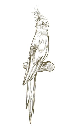 Illustration drawing style of parrot Zdjęcie Seryjne