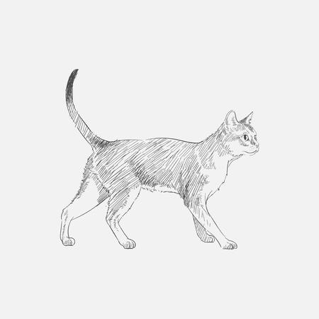 Estilo de dibujo de ilustración de gato Foto de archivo - 96568495