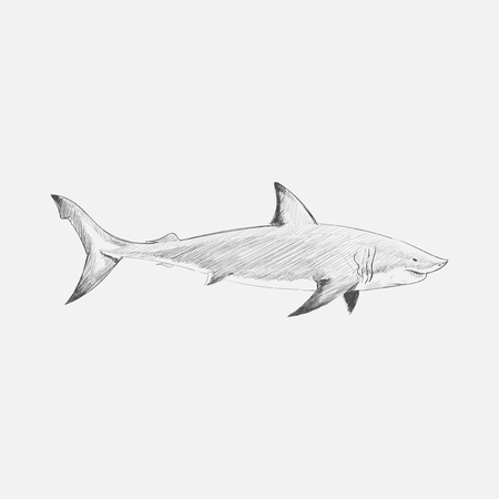 Illustration drawing style of shark