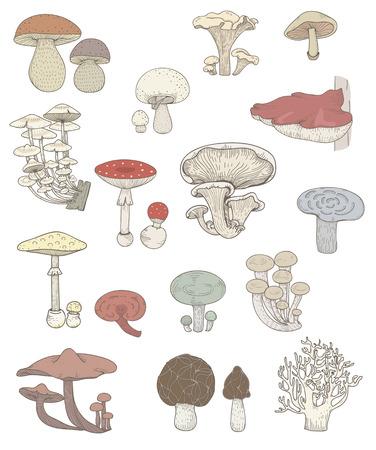 Illustration of different kinds of mushrooms