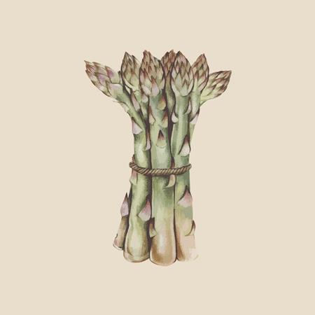 Asparagus concept