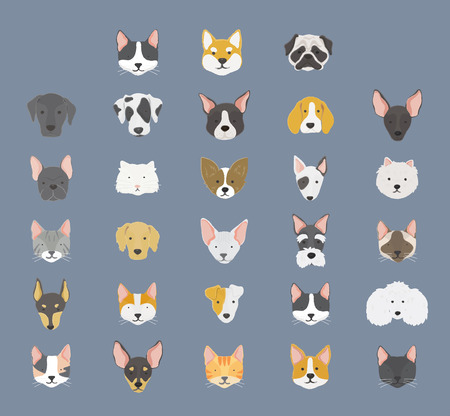 Collection of pet dogs concept