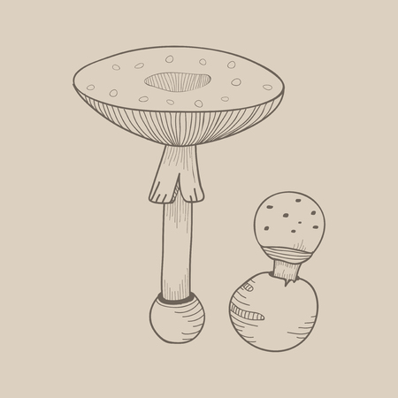 Illustration of mushroom Stock Illustration - 96683311