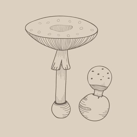 Illustration of mushroom Foto de archivo - 96683311