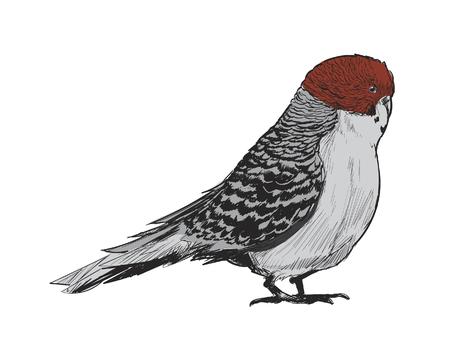 Illustration drawing style of parrot Zdjęcie Seryjne