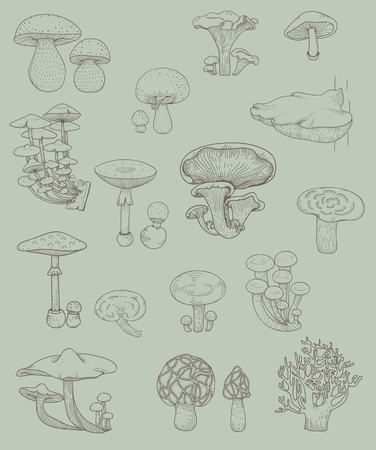 Illustration of different kinds of mushrooms 스톡 콘텐츠 - 96683395