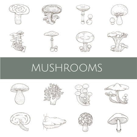 Illustration of different kinds of mushrooms 스톡 콘텐츠 - 96683498