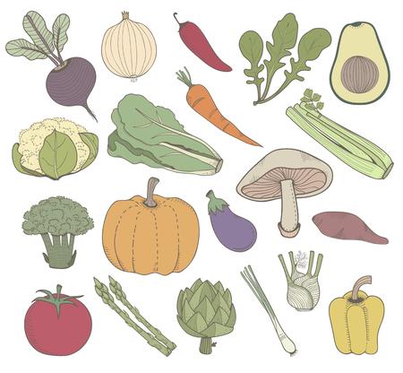 Illustration of different kinds of vegetables