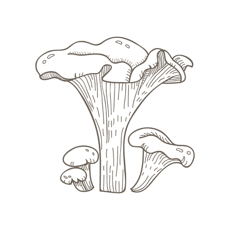 Illustration of mushroom Stok Fotoğraf - 96683508