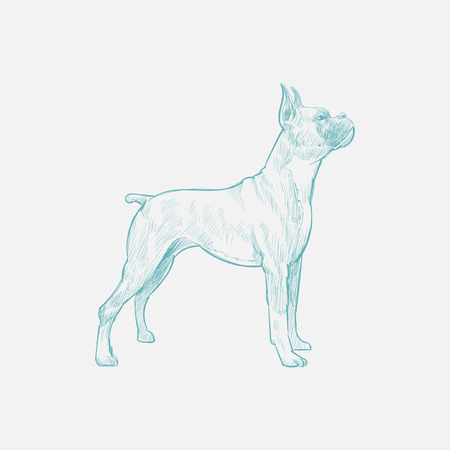 Illustration drawing style of dog Archivio Fotografico - 96684006