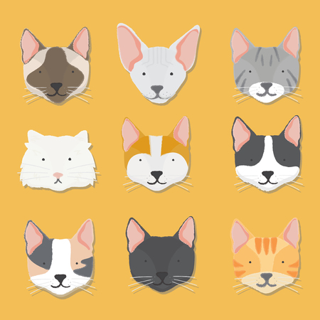 Illustration of cat faces