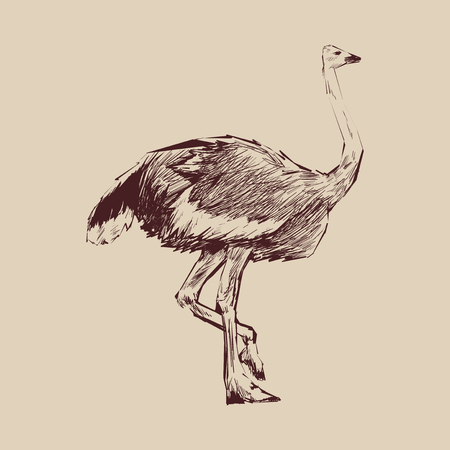 Illustration drawing style of ostrich 스톡 콘텐츠