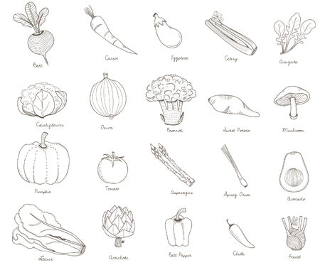 Illustration of different kinds of vegetables 스톡 콘텐츠 - 97156184
