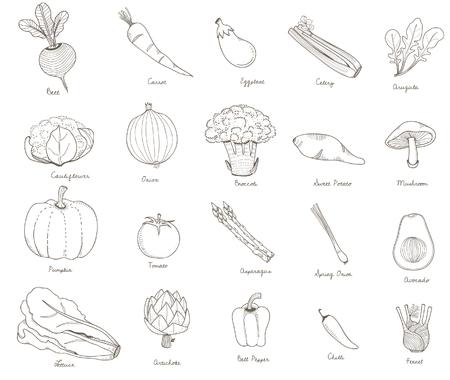 Ilustración de diferentes tipos de verduras Foto de archivo - 97156184