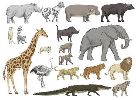 Illustration drawing style of animals collection Standard-Bild - 97156360